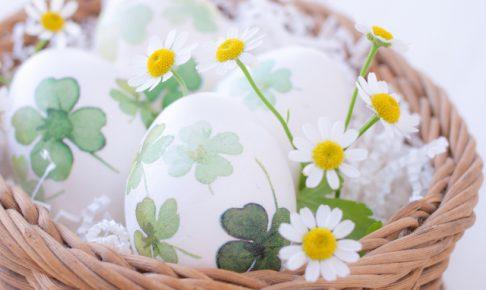 インキュベーター卵
